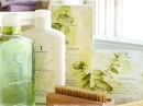 Eucalyptus Thymes for women and men Pictures