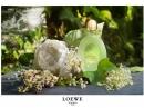 Aire Evasion Loewe für Frauen Bilder