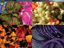 Pichola Neela Vermeire Creations für Frauen und Männer Bilder