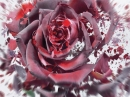 Bal de Roses Keiko Mecheri для мужчин и женщин Картинки