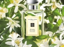 Orange Blossom Jo Malone for women and men Pictures
