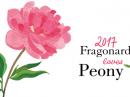Pivoine Fragonard za žene Slike