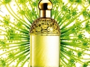 Aqua Allegoria Angelique Lilas Guerlain for women Pictures