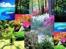 Asian Gardens Nicolas Danila für Frauen Bilder