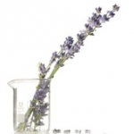 Organic Perfumery Workshop and Branding Your Natural Product Session