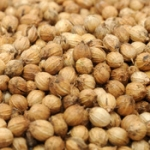 Coriander – Herb and Spice