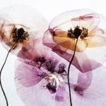 Zara Fragrances: Radiant Woods, Deep Vanilla, Sunrise Rose