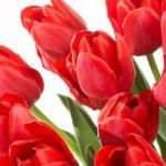 Fragrantica Celebrates Love in Red on Instagram