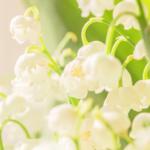 Perfumed Horoscope February 20 - February 26