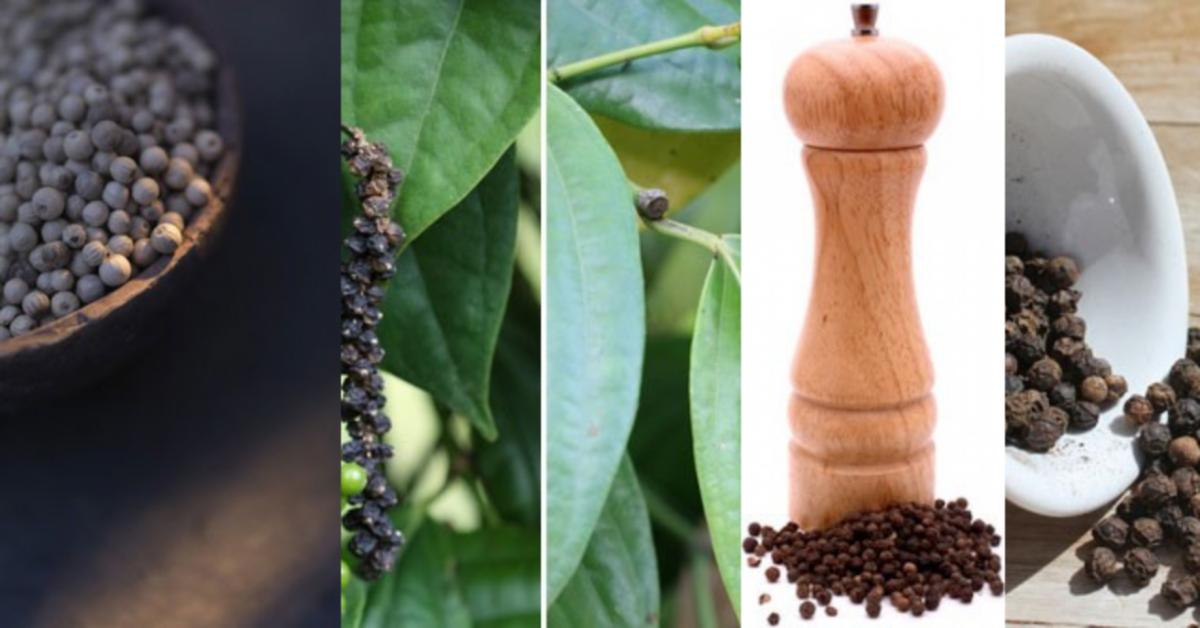 Black Pepper A Warm Energy Raw Materials