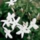 Perfumed Horoscope: May 23 - May 29