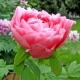 Perfumed Horoscope: May 30 - June 5
