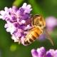 Perfumed Horoscope: June 6 - June 12
