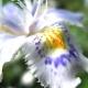 Perfumed Horoscope: June 27 - July 03