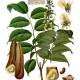 Tolu Balsam and Peru Balsam: Plush and Warm