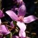 Perfumed Horoscope: February 11 - 17