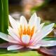 Perfumed Horoscope: February 18 - 24