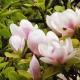 Perfumed Horoscope: March 17 - 24