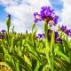 Perfumed Horoscope: April 22 - 28