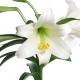 Perfumed Horoscope: May 6 - 12