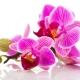 Perfumed Horoscope: June 3 - 9