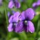 Perfumed Horoscope: June 10 - 16