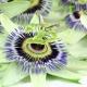 Perfumed Horoscope: June 24 - 30