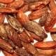 Tonka Beans – Sweet, Intoxicating Aromas of South America