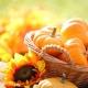 Perfumed Horoscope: November 4-10