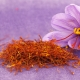 The Crocus-Hued Stigma of Saffron