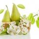 Perfumed Horoscope: April 21 - May 8