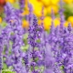 Perfumed Horoscope: May 2 - May 11