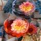 Perfumed Horoscope: May 26 - June 1
