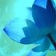 Mystical Aquatic Flower – Lotus