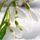 Perfumed Horoscope January 12 - January 18
