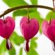 Perfumed Horoscope February 2 - February 8
