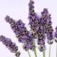 New scent from Lavanila - Vanilla Lavender