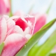 Perfumed Horoscope February 22 - February 28