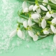 Perfumed Horoscope March 21 - March 27