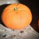 Sweet and Boozy: Alexandre J's Mandarine Sultane