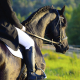 New Fragrance Review: Sonoma Scent Studio Equestrian - The Beauty of the Barn