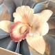 Suleko Scented Orchid Perfume Diffuser