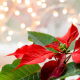 Perfumed Horoscope December 13 - December 19