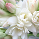 Best in Show: Tuberose (2017)