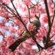 Perfumed Horoscope April 3 - April 9