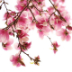 Perfumed Horoscope April 10 - April 16