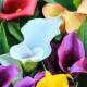 Perfumed Horoscope April 24 - April 30