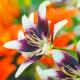Perfumed Horoscope May 1 - May 6