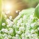 Fragrance News: Natura, Habituation and Hair Spray