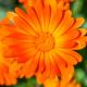 Perfumed Horoscope May 22 - May 28